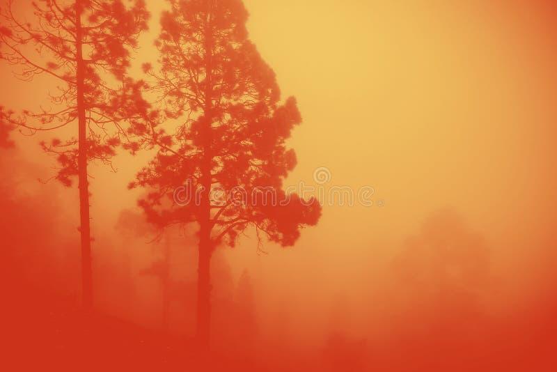 Llamas intensas de un incendio forestal masivo imágenes de archivo libres de regalías