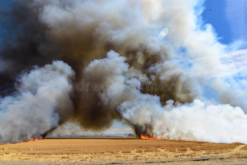 Llamas que queman el campo de rastrojo del trigo foto de archivo