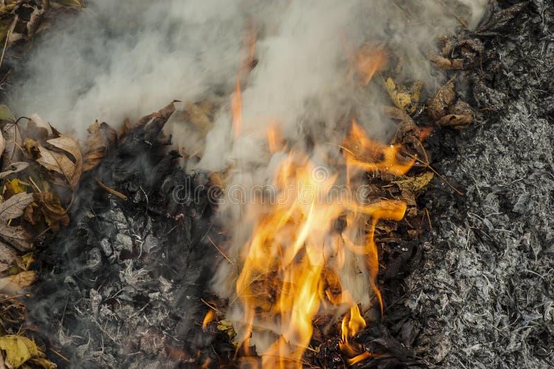 Llamas y cenizas de la quema seca de las hojas fotografía de archivo libre de regalías