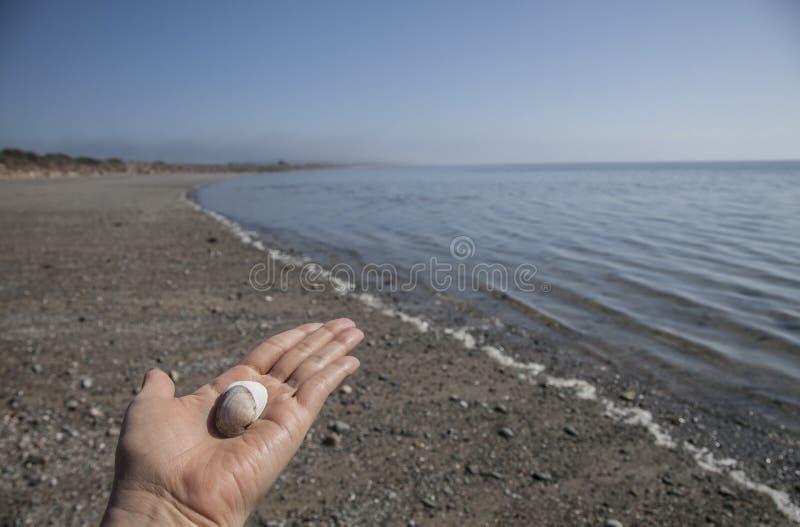 Llanbedrog, Gales - conchas do mar em uma mão imagem de stock royalty free