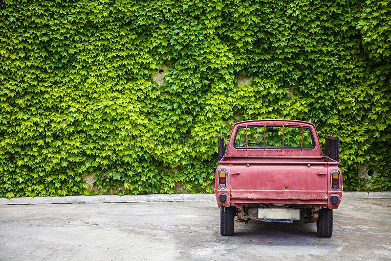 LLandudno, Wales, UK - MAY 27, 2018 Enormous wall adorned with green vine crawling leaves. An old red truck was parked facing the stock image