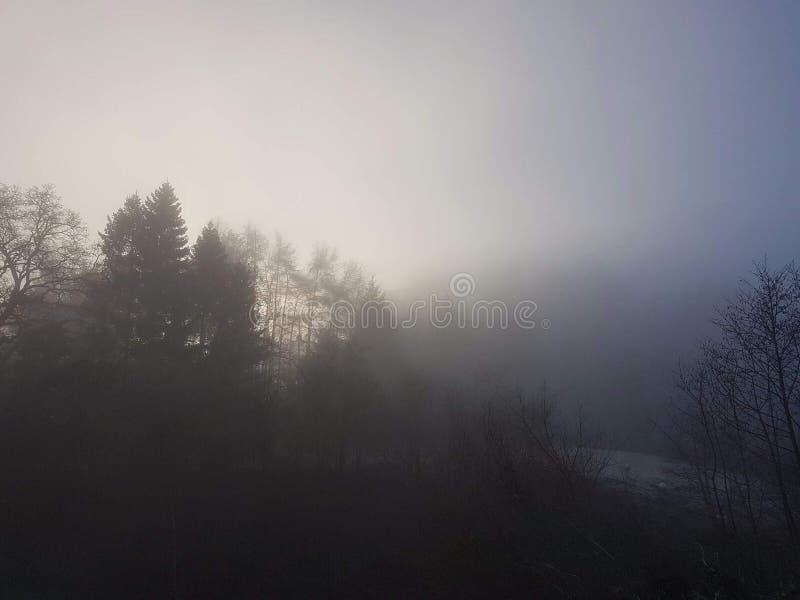 Llanidloes自然 免版税库存图片