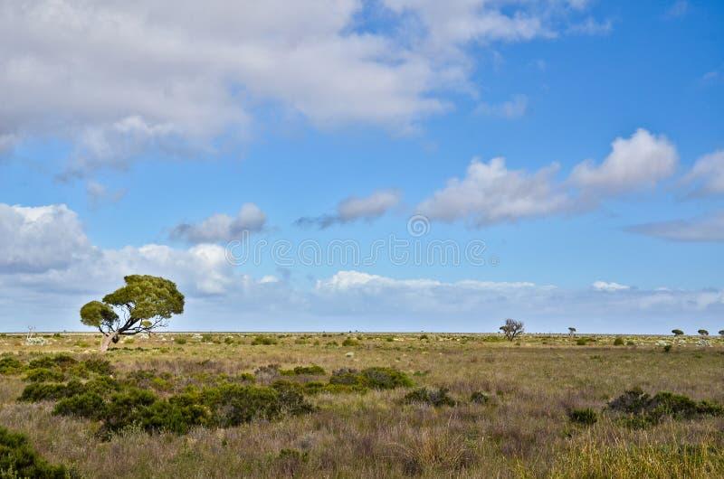 Llano de Nullarbor fotografía de archivo libre de regalías