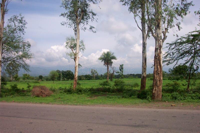 Llanos de Punjab fotografía de archivo libre de regalías