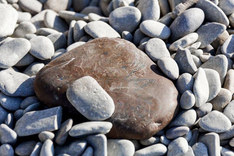 Llarge brown stone among the sea of pebbles. Llarge brown stone among sea of pebbles on sea shore at summer morning royalty free stock image