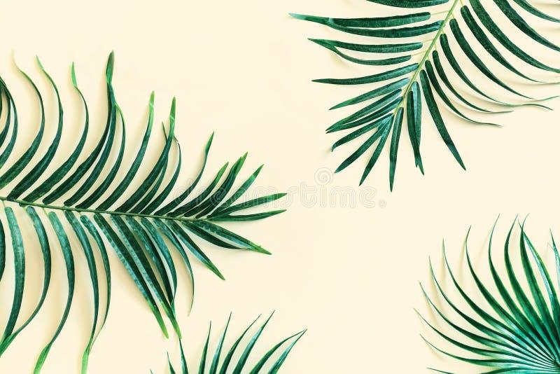 Llayout gjorde av gröna tropiska sidor Exotiskt begrepp för minsta sommar med kopieringsutrymme fotografering för bildbyråer