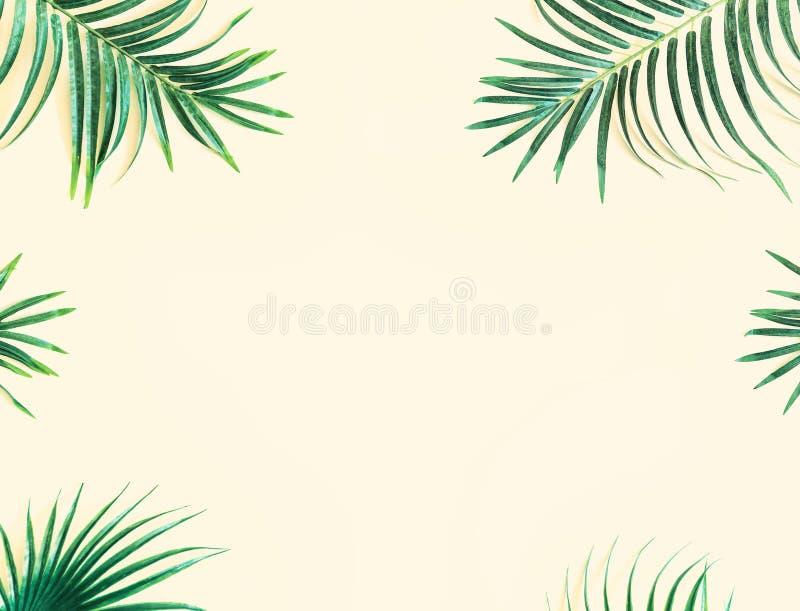 Llayout gjorde av gröna tropiska sidor Exotiskt begrepp för minsta sommar med kopieringsutrymme arkivfoton