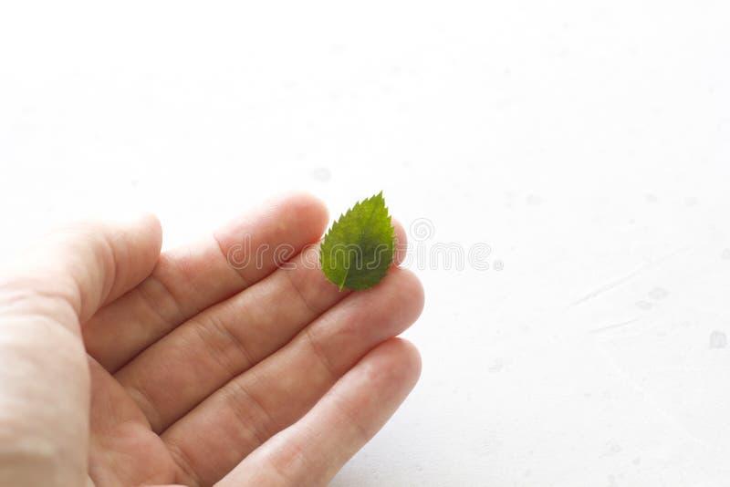 Lle bugie verdi di una foglia su una mano, su un fondo concreto grigio Ecologia, alimento sano Disposizione piana, vista superior immagini stock libere da diritti