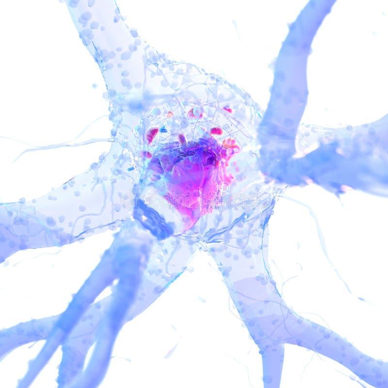 Lle cellule nervose illustrazione di stock