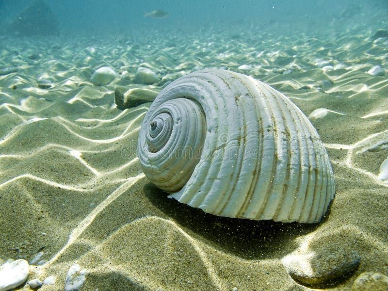 Lle coperture del mare