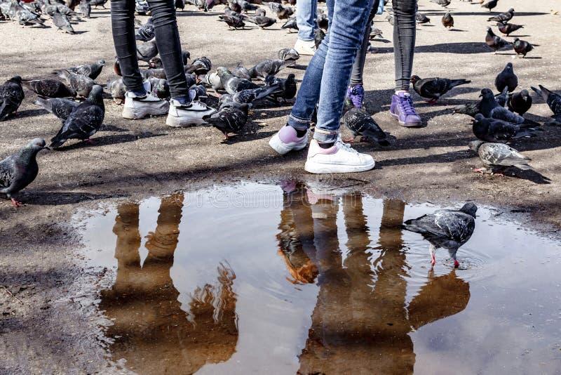 Lle gambe di tre ragazze in jeans stretti sui precedenti delle pozze, dell'asfalto e dei piccioni d'alimentazione in piazza, modo fotografie stock libere da diritti