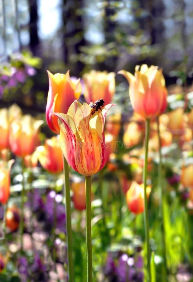 Llegada de las abejas fotos de archivo libres de regalías