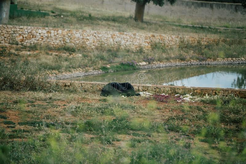 Lleve en parque zoológico del safari en el apulia Italia de Fasano fotos de archivo