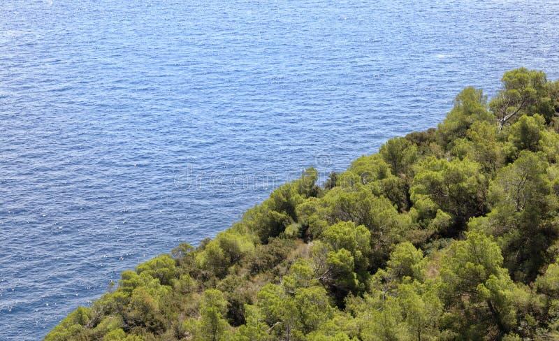 Llonga di Cala, ibiza, spagna: foresta e mare immagine stock