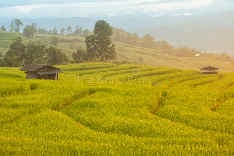 Lloviendo el arroz colgante coloque en Chiang Mai, Tailandia La puesta del sol scen imágenes de archivo libres de regalías