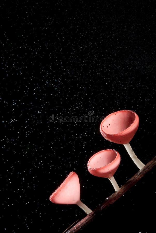 Llueva la seta rosada hermosa del champán alineada en la madera imagenes de archivo
