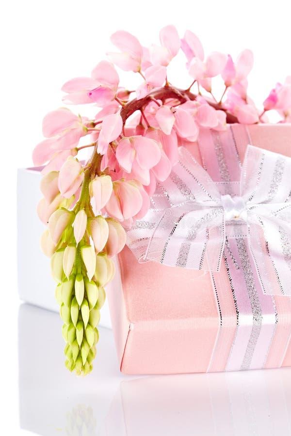 Llupine et boîte-cadeau. photos stock