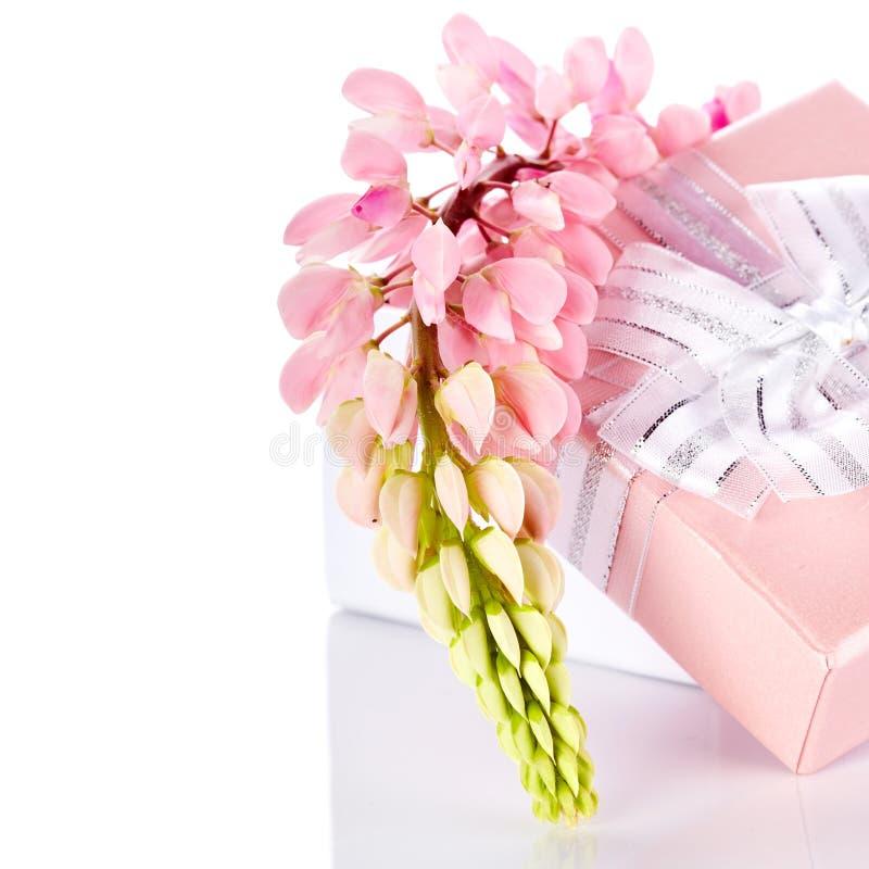 Llupine et boîte-cadeau. photo libre de droits