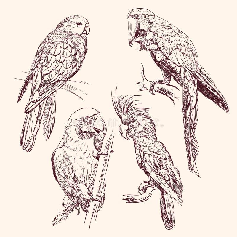 Llustration do vetor da coleção do papagaio ilustração royalty free