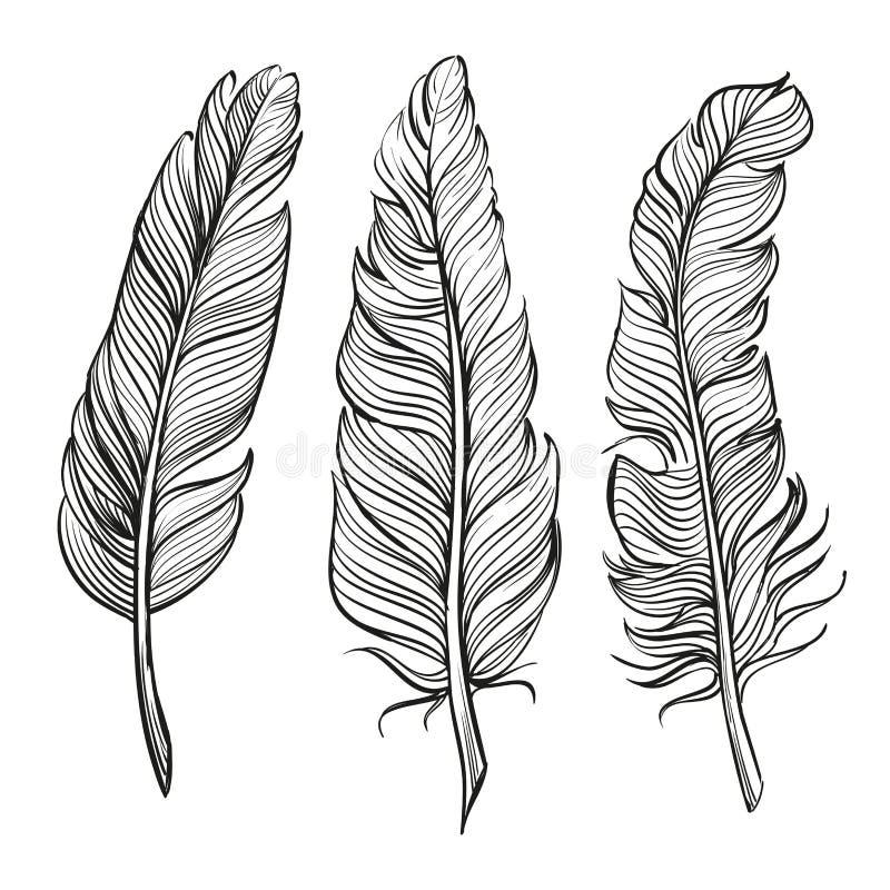 Llustration för vektor för fjäderuppsättning hand dragen stock illustrationer