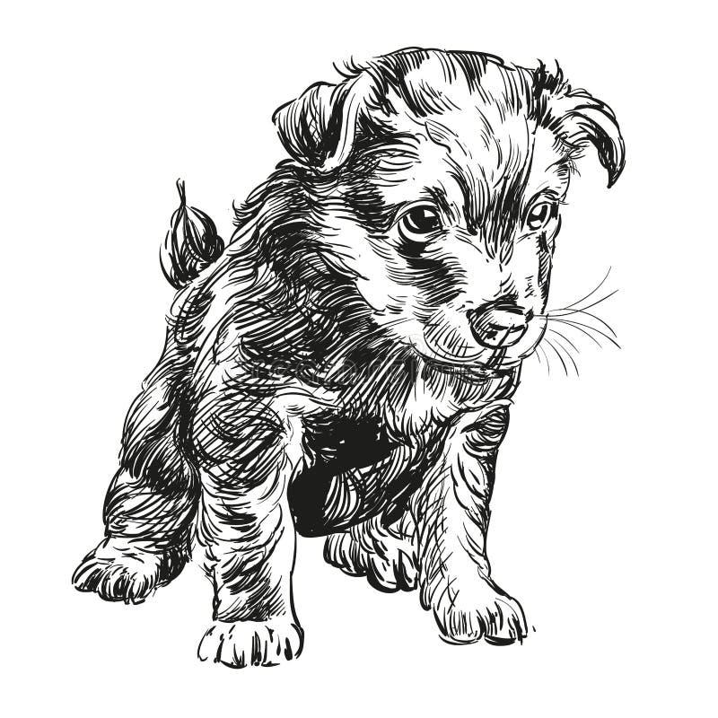 Llustration tirado mão do vetor do cão de cachorrinho ilustração royalty free