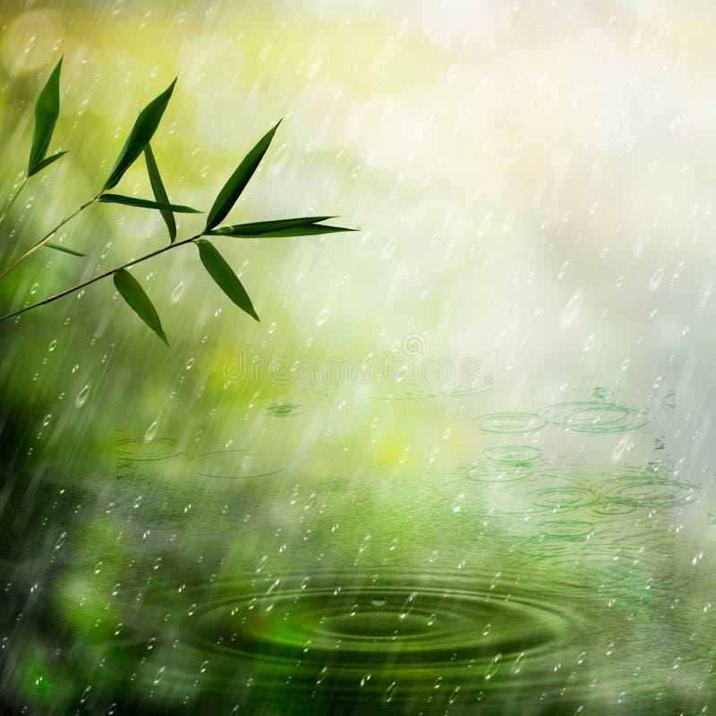 Lluvia brumosa en el bosque de bambú imágenes de archivo libres de regalías