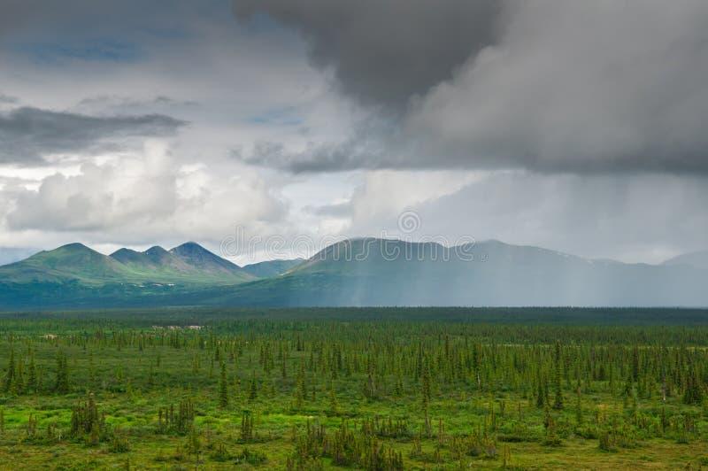 Lluvia de Alaska imagen de archivo