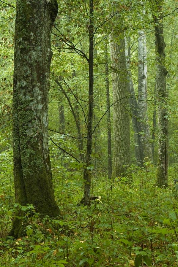 Lluvia del bosque de hojas caducas después fotos de archivo libres de regalías