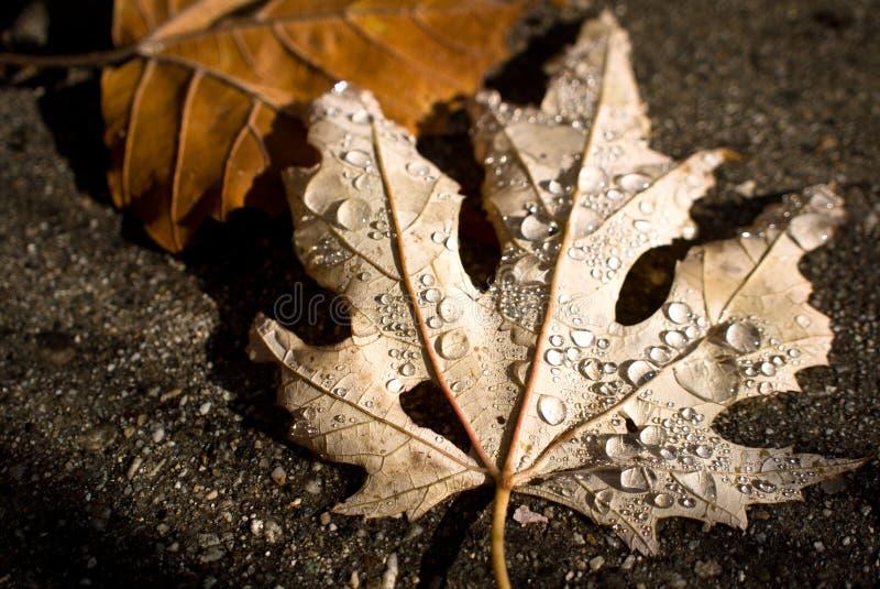 Lluvia del otoño en la hoja foto de archivo