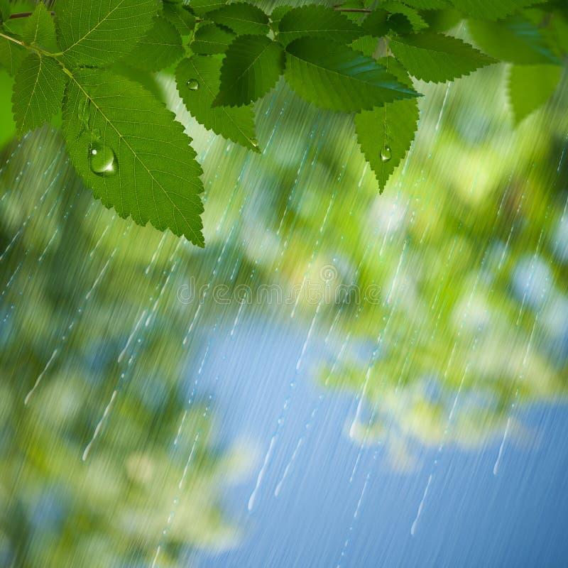 Lluvia del verano. stock de ilustración