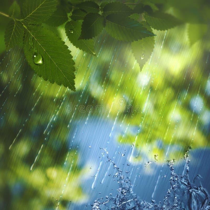 Lluvia del verano fotos de archivo libres de regalías
