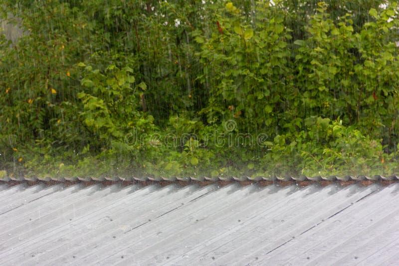 Lluvia del verano en el fondo del follaje verde imagen de archivo libre de regalías