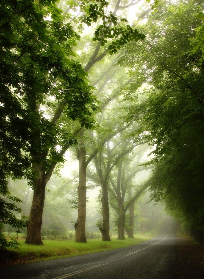 Lluvia del verano en montañas azules foto de archivo libre de regalías