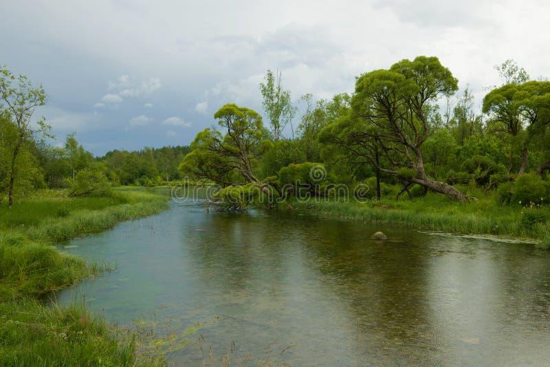 Lluvia en el río de Izvarka en una tarde de julio Izvara, región de Leningrad imagen de archivo libre de regalías