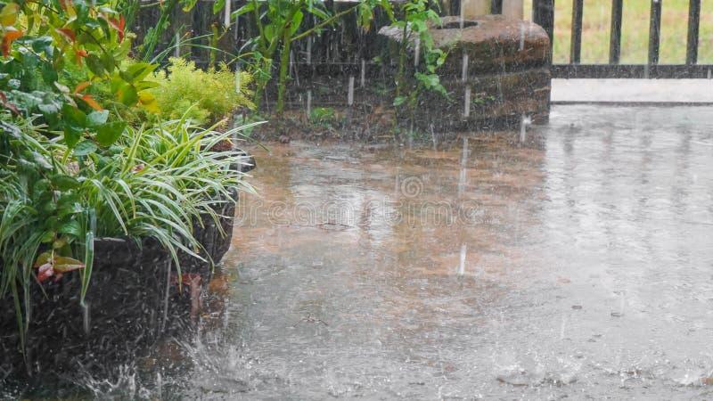 Lluvia en las plantas en la yarda de la casa fotografía de archivo libre de regalías