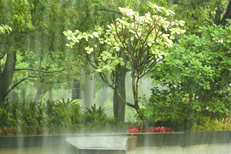 Lluvia en los jardines por la bahía - jardines botánicos en Singapur fotografía de archivo