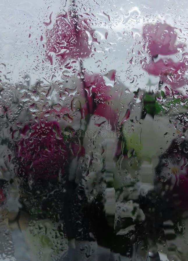 Lluvia en mi ventana fotografía de archivo libre de regalías