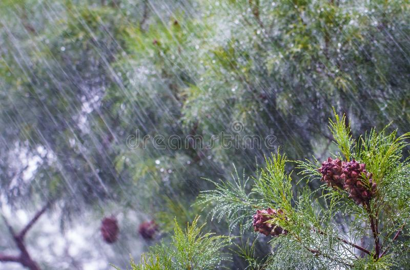 Lluvia pesada imagenes de archivo