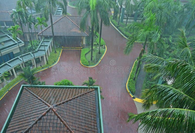 Lluvia pesada común del aguacero en país tropical en un centro turístico hermoso con el un montón de palmeras altas fotos de archivo libres de regalías