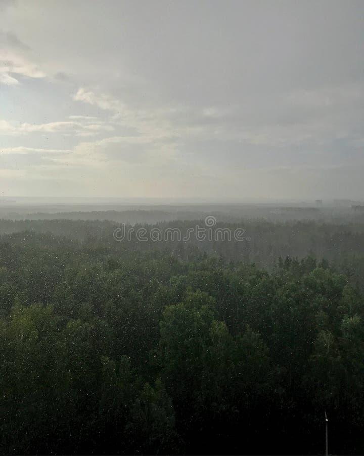 Lluvia sobre bosque del pino imágenes de archivo libres de regalías