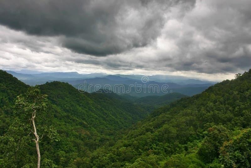 Lluvia sobre la selva tropical imagenes de archivo