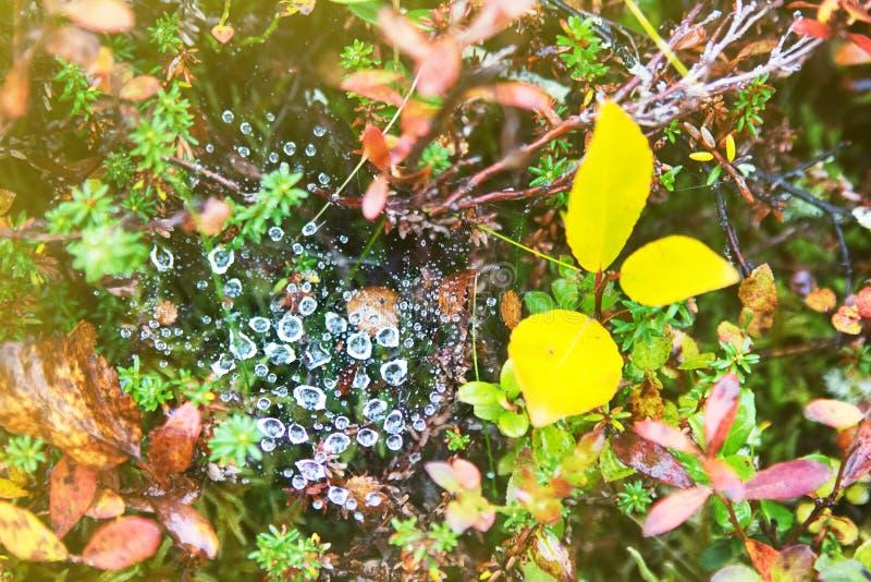 Lluvia y descensos del otoño en la web de araña imágenes de archivo libres de regalías