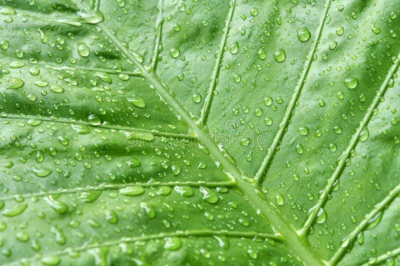 Lluvia y hoja fotografía de archivo