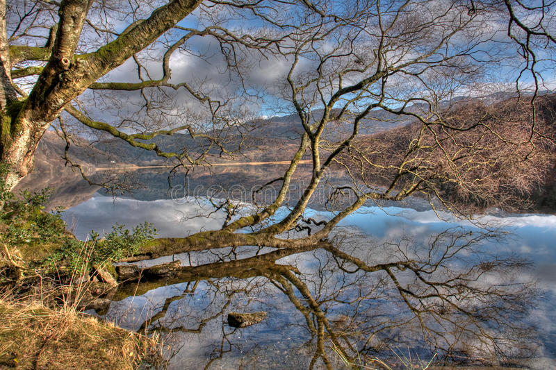 Llyn Dinas Reflections Stock Image