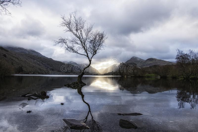 The Lone Tree - Llanberis North Wales UK. Llyn Padarn - Llyn Padarn, a site of Special Scientific Interest, is situated in the Llanberis Pass and nestles below royalty free stock photos