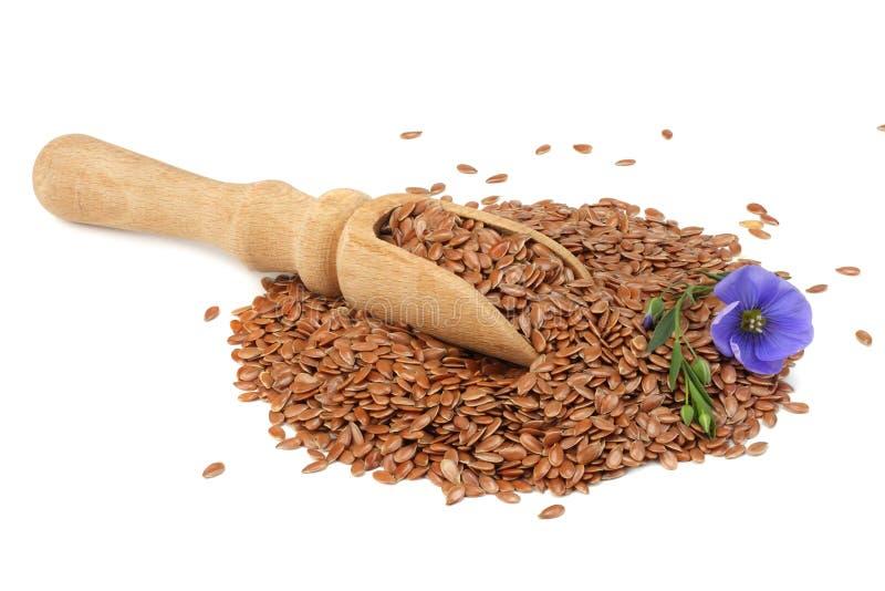 lnów ziarna w drewnianej łyżce z kwiatem odizolowywającym na białym tle flaxseed lub linseed zboża zdjęcia stock