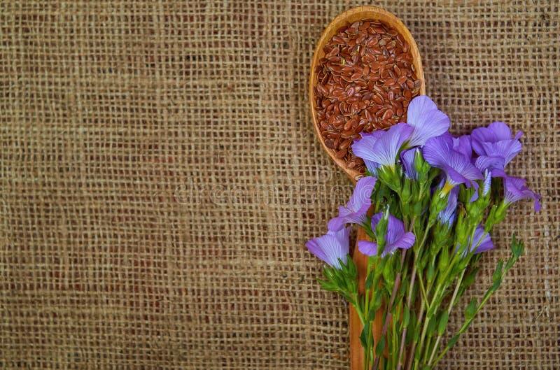 Lnów ziarna w drewnianej łyżce z linum roślinami obraz royalty free