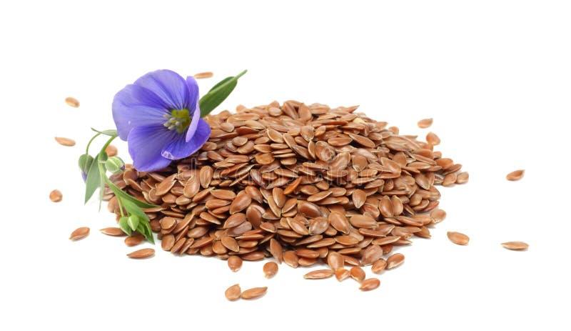 Lnów ziarna z kwiatem odizolowywającym na białym tle flaxseed lub linseed zboża fotografia royalty free