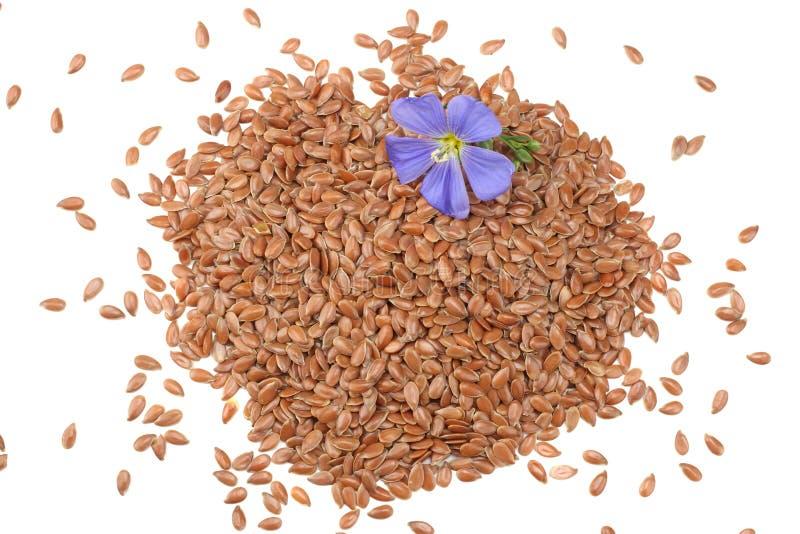 Lnów ziarna z kwiatem odizolowywającym na białym tle flaxseed lub linseed zboża Odgórny widok obraz royalty free