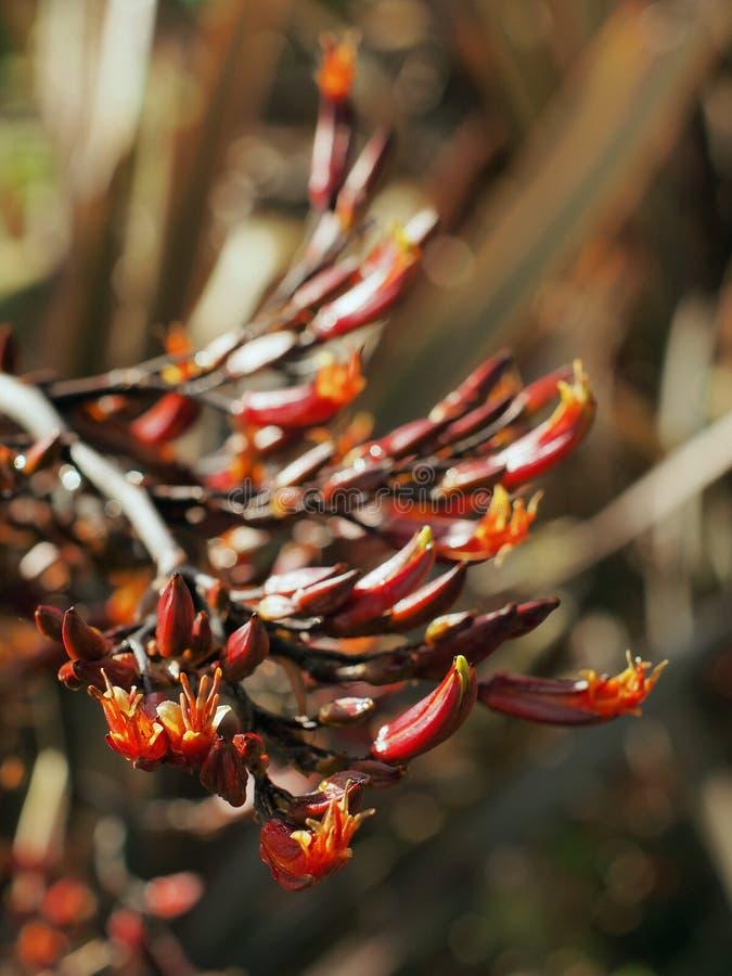 Lna kwiatu harakeke w kwiatu lata czasie fotografia royalty free